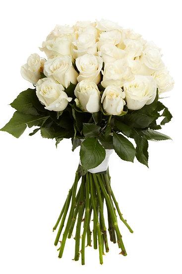 Strahlende weiße Rosen mit Masche