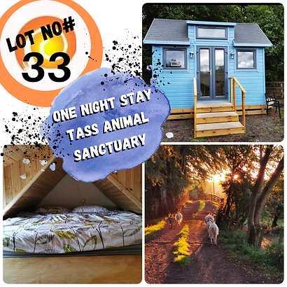 Lot 33 stay at animal santuary.png