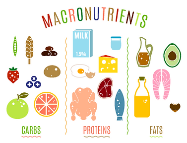 macro-nutrients-Converted-01.png