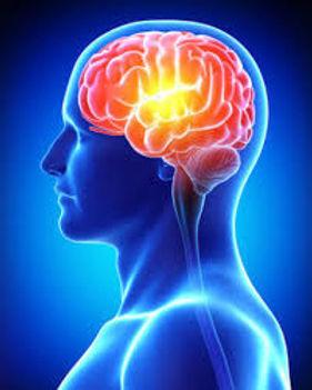 Brain B copy.jpg