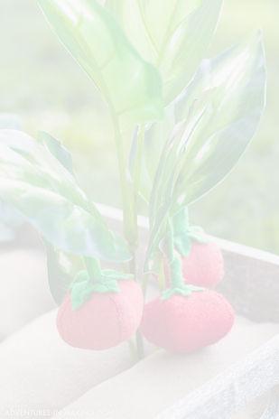 vegetable watermark copy.jpg