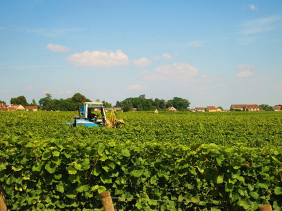 【ブドウ畑が命!】産地から見るワイン!ブルゴーニュ編♪