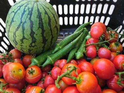 【安く美味しく健康に】旬の食材を使う3つの理由!