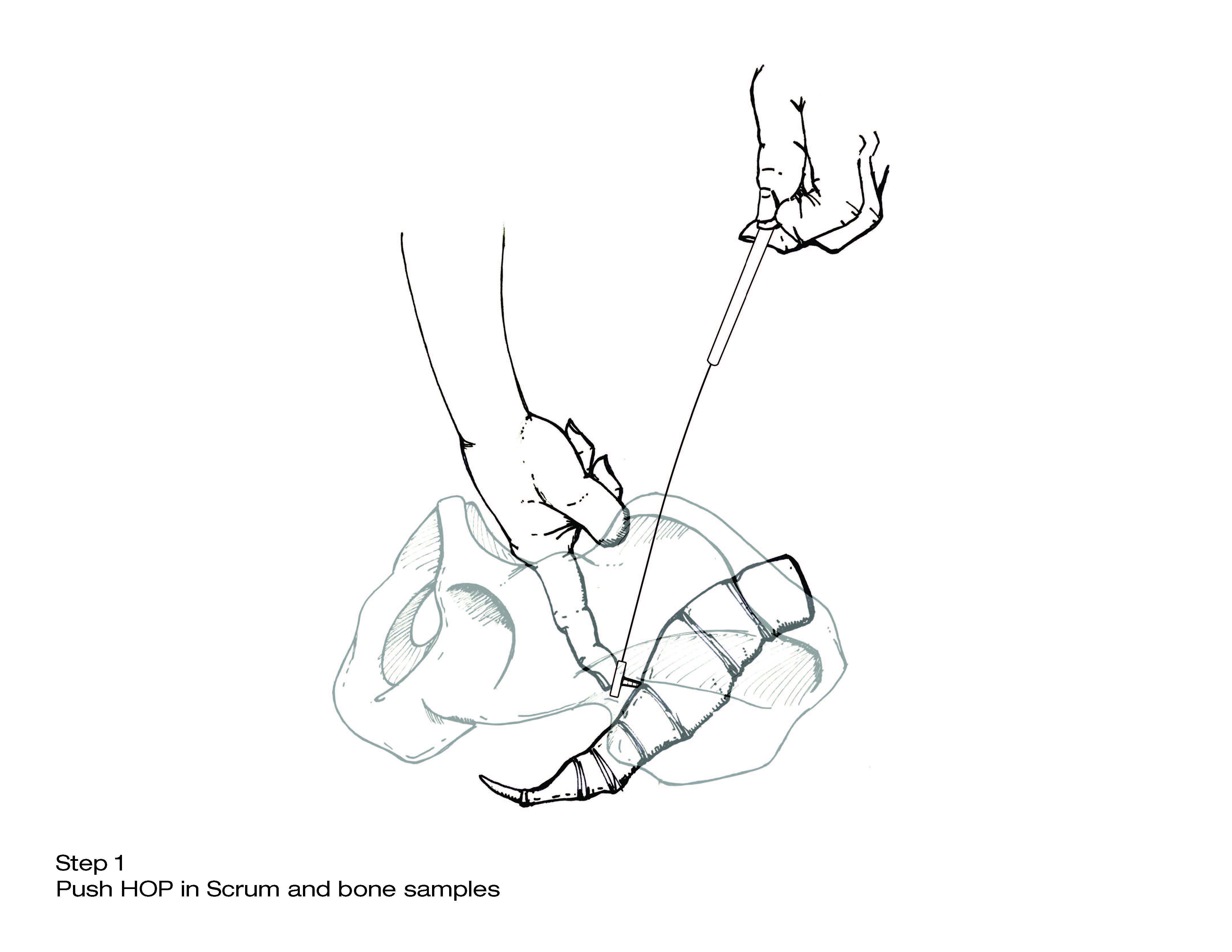 Step Samples illustrartion _Page_1.jpg
