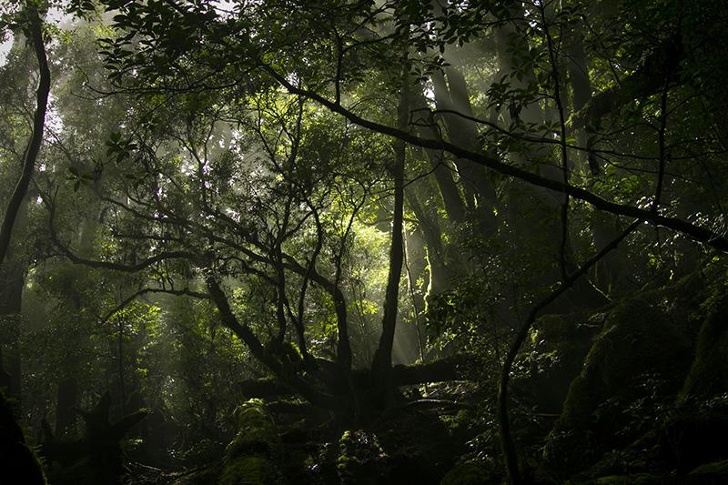 屋久島天文の森