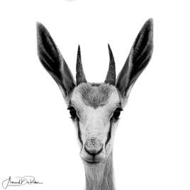 Lémutien Madagascar