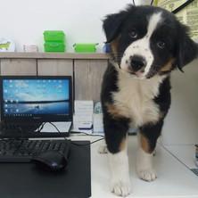 Contact-hond02.jpg