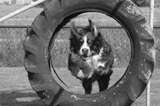 Hondencursus