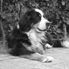 Honden-Lage-Mierde
