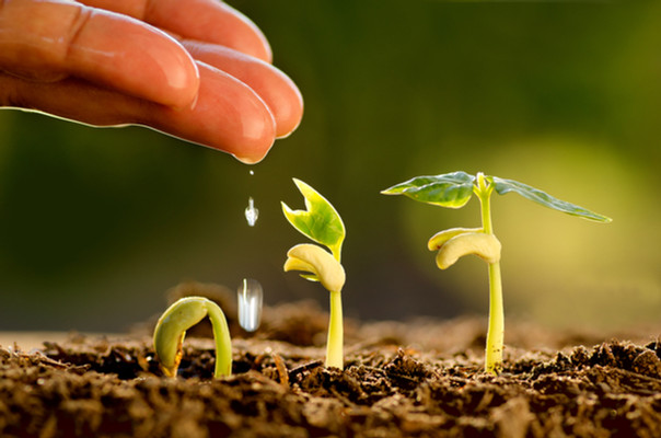 Agriculture and Seedling concept by Male