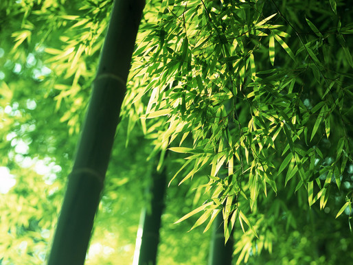 What do you know about bamboo?