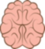 brain-4185951_960_720.png
