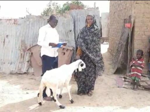 Çad'da İLKDER ve gönullulleri olarak adak kurbanlarimiz kesildi ve ihtiyac sahiplerine dagıtıldi.
