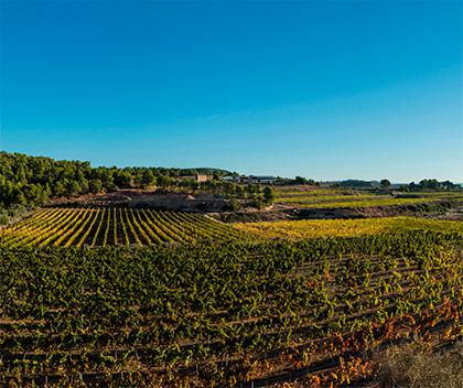 Parcel·les de vinya a la Terra Alta (Font: INCAVI)