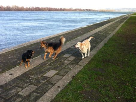 Da li aromaterapija zaista deluje na pse?