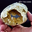 Thumbnail: Fossilized Calcite Clam - Rucks Pit, Fort Drum, Florida.