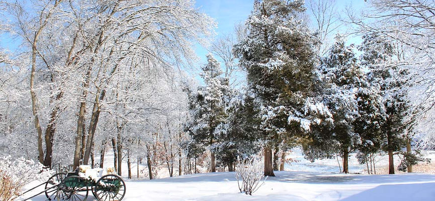specialsaving_winter-wide.jpg