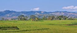riziere sumba timur
