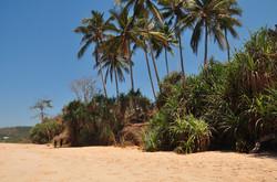 terrain à vendre Sumba