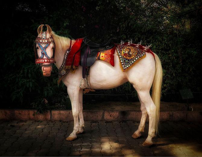 Wedding horse3_edited.jpg