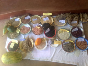Village Seed Fair a success