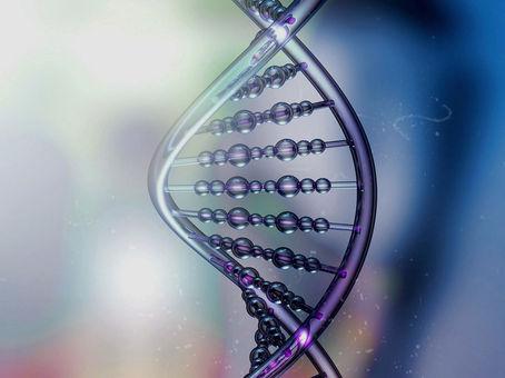 Die DNA Ihres Verhaltens und Ihrer Kompetenzen