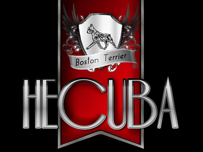 Hecuba Boston Terrier kennel Quality Breeding Greece - Cuprus - Europe τερριέ Βοστόνης Ελλάδα Κύπρος Ευρώπη