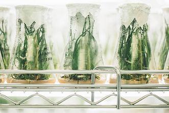 Plants%20in%20beakers_edited.jpg
