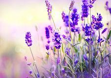 blog pic - lavender.jpg