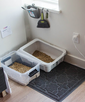 Litter Box Setups