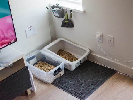 Litter Box Setups
