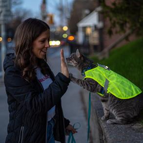RC Pets Luna Hi Vis Vest