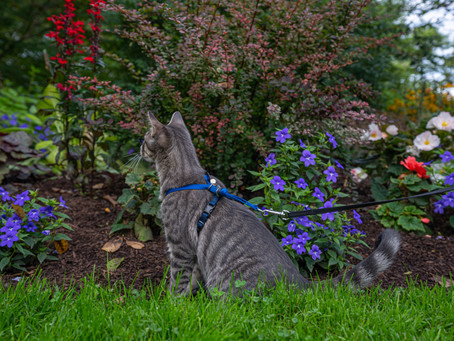 The Dangers of Cat Exploring (Part 1: Plants and Flowers)