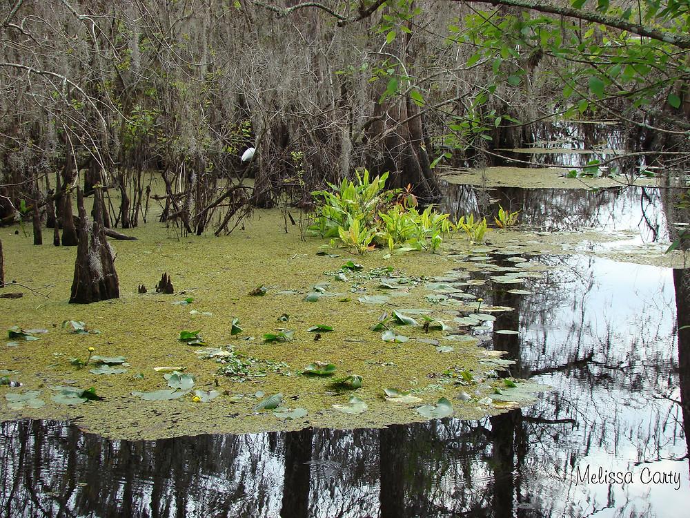 Photo: Park Lake