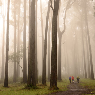 Dandenong misty mornings