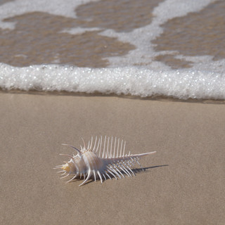 Spikey Creature from the deep