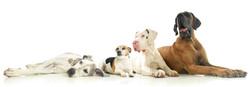 Fotostudio Wyck 4 Dogs.jpg