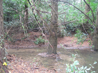 The area around the leat, trees were becoming dislodged due to the water swirling around the roots and moving the earth.