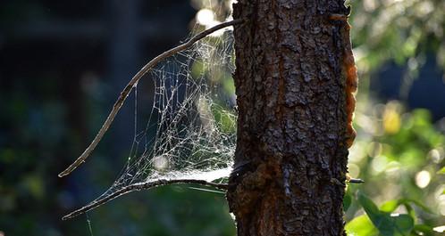 DSC_0297 cobweb trunk web.jpg