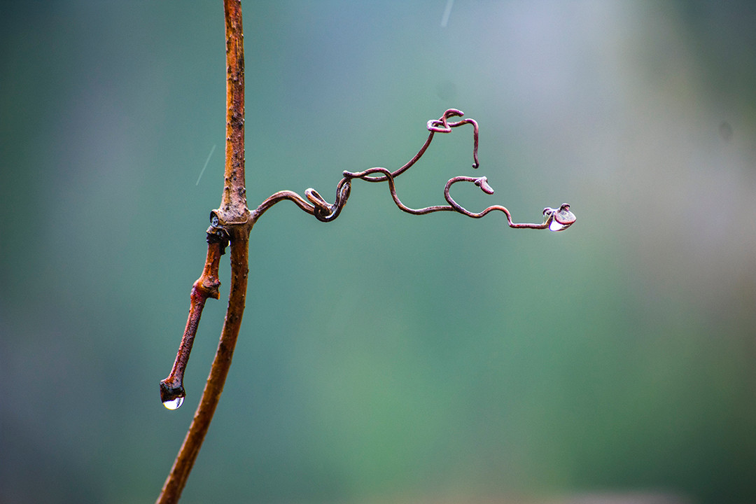 DSC_1660 curly branch w raindrop web.jpg