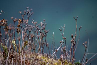 DSC_0077 rich colour bushes web.jpg