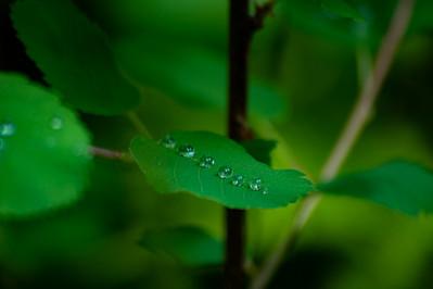 DSC_1317 line of drops green web.jpg