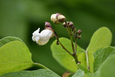 DSC_2097 tree flower web.jpg