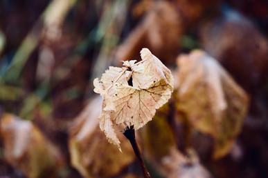 DSC_0807 fall leaves yellow red web.jpg