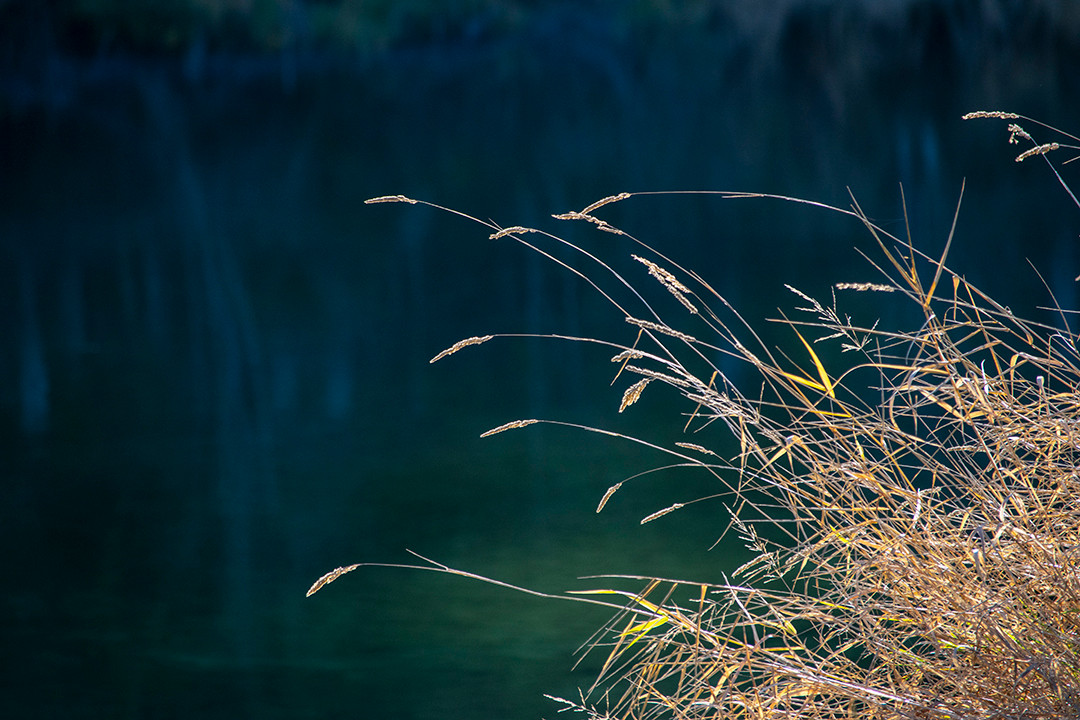 DSC_0933 yellow grass river web.jpg