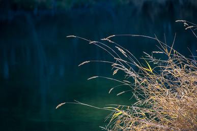 DSC_0933 yellow grass river web.jpg