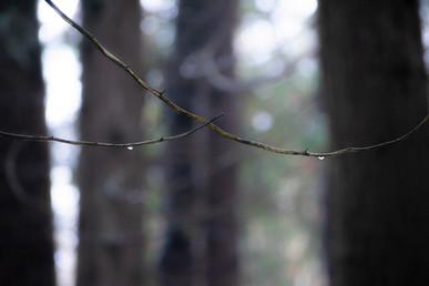 DSC_0211 double stick drop web.jpg