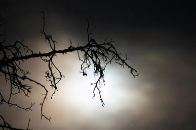 DSC_0416 ghostly branch 2 web.jpg