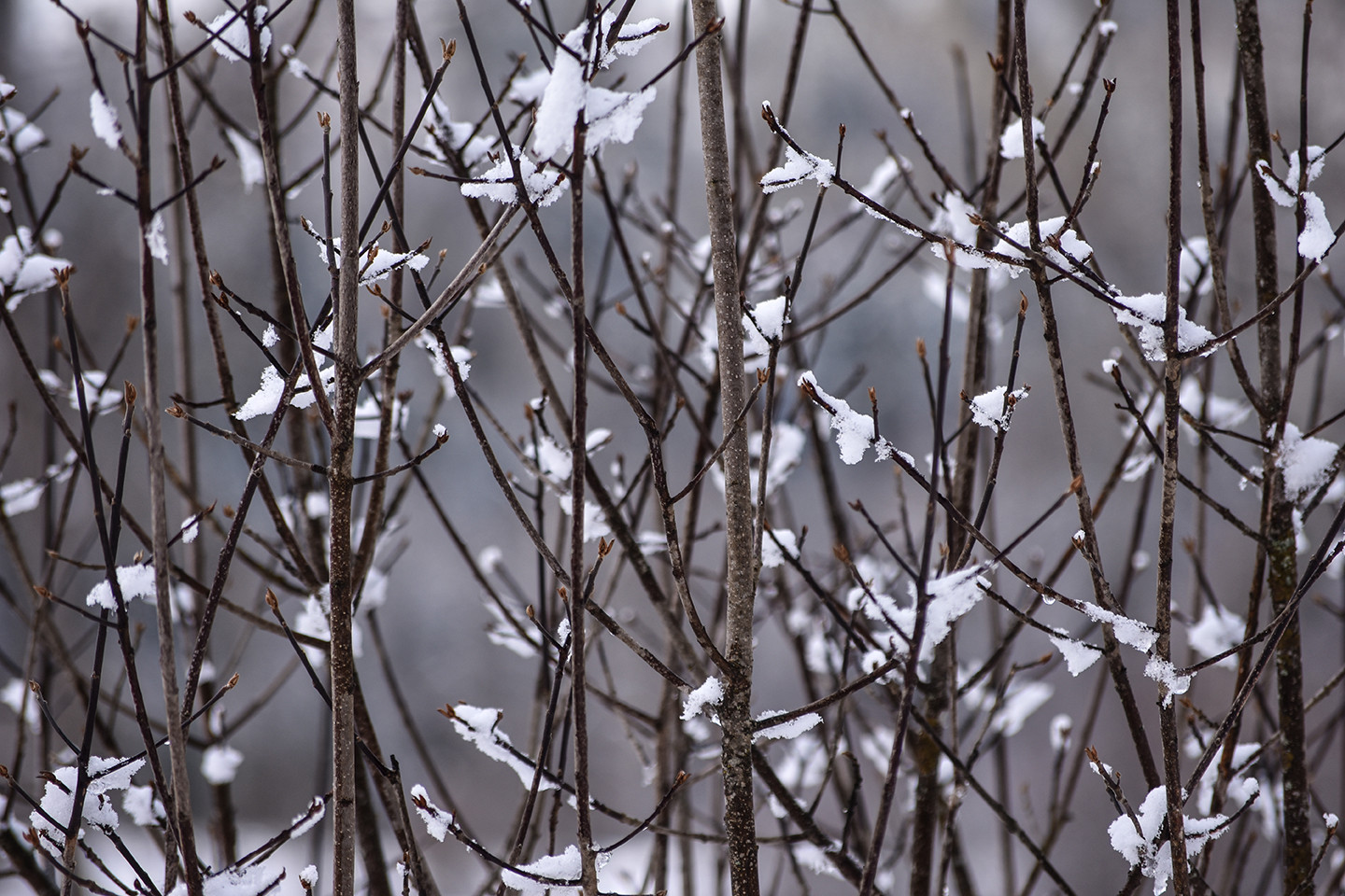 bush in snow branches 3.jpg