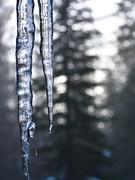 double icicle tree